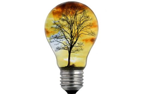 picture of tree with lights bulb light with tree free stock photo domain pictures