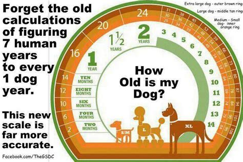 what age is a puppy how is your doggies