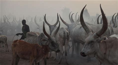 Lc Killing 41 40 killed dozens in south sudan cattle raid