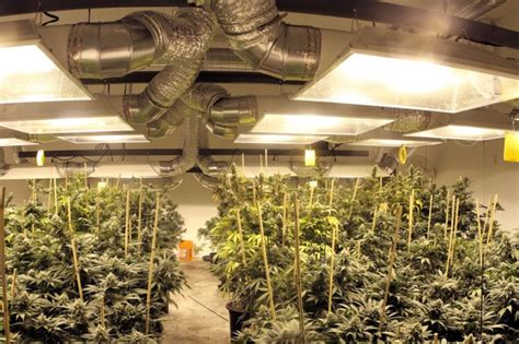 grow room design the 21 best growroom tips and tricks from pros 183 high times