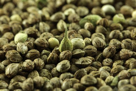 Weed Periodic Table Hemp 101 What Is Hemp How Is Hemp Used And Why Is It