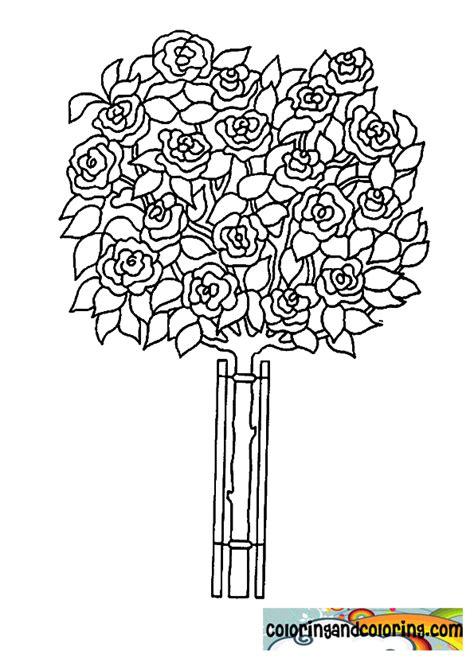 rose bush coloring page rose bush coloring pages