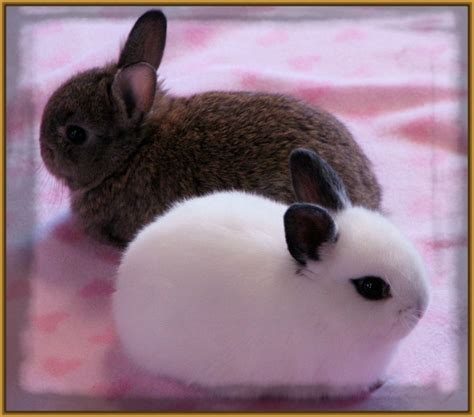minicuentos de conejos y imagenes de conejos enanos de angora archivos imagenes
