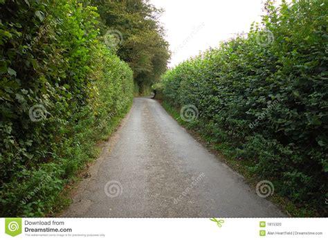 narrow road  high hedge stock photo image