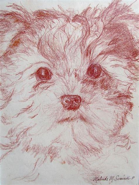yorkie sketch yorkie pup sketch drawing by melinda saminski