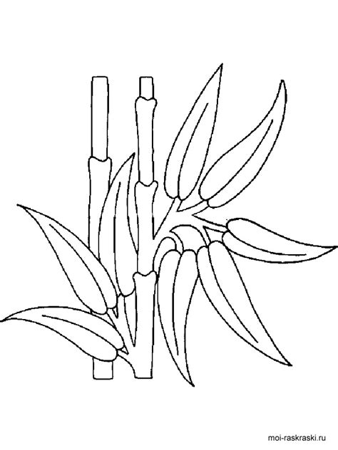 bamboo tree coloring page bamboo coloring pages for kids free printable bamboo tree