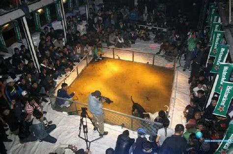 underground banned heineken is proud sponsor of dog fights oops