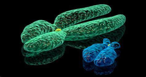 Men who lose Y chromosome have high risk of cancer ... Y Chromosome