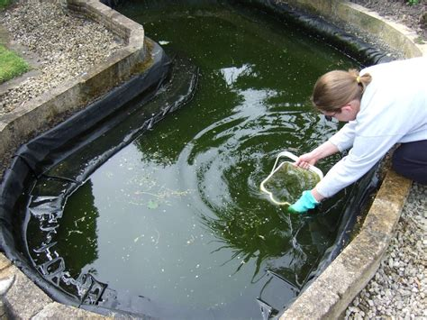 backyard fish pond maintenance garden pond cleaning tips advice for outdoor pond cleaning
