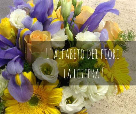 fiore inizia con la a fiori iniziano con la lettera i dell alfabeto