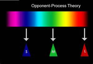 opponent process theory of color vision a review of color science in dentistry the process of
