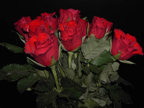 wallpaper flower ke 90 wedding red rose flower wallpapers love roses pictures