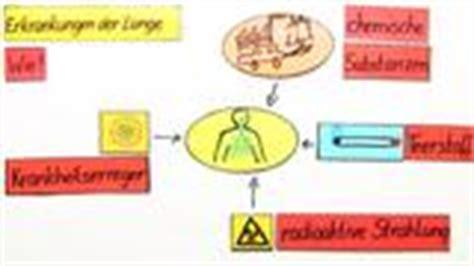 und innere atmung aufbau und funktion der atmungsorgane biologie lernen