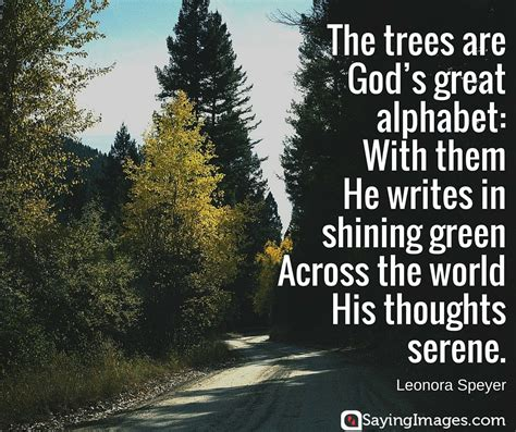 tree quotes tree quotes about www pixshark images