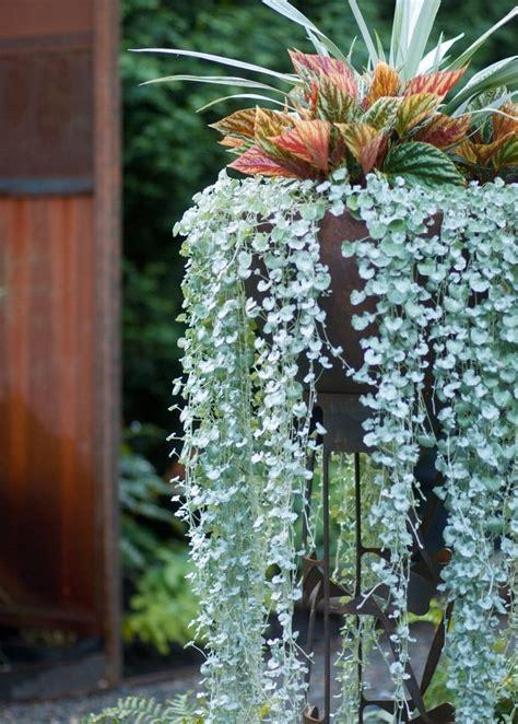garden designer works magic   pot    foliage