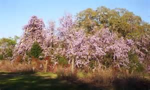 bonsai beginnings romantic and nostalgic