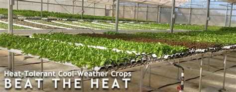 heat tolerant crops getting your cool weather loving crops through summer s heat