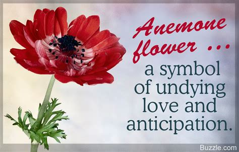 anemone flower meaning meaning of the anemone flower and other intriguing facts