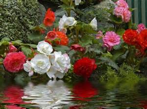 flowers in garden garden of flowers more flowers