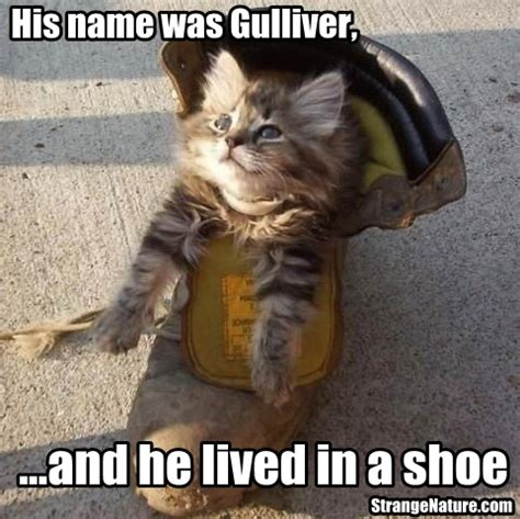 funny cat in shoes funny image collection funny animal pictures funny