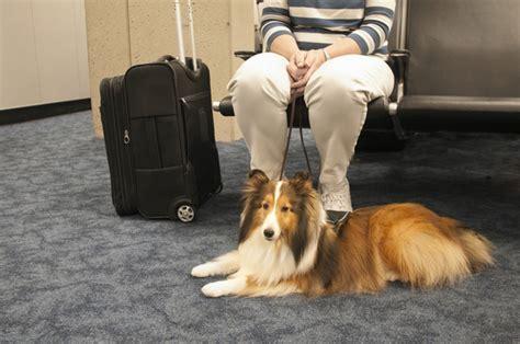 cani in cabina aereo usa i cani potranno viaggiare in cabina sugli aerei della