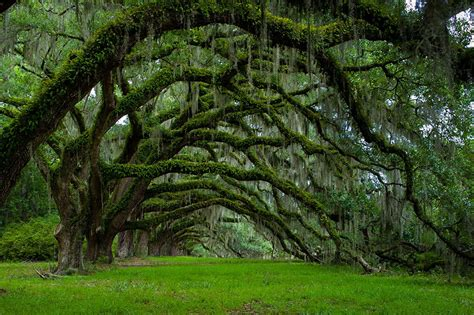 the sixteen trees of 16 of the most amazing trees in the world glamgrid