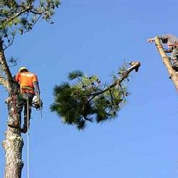 service college station college station tree service arboriculture et 233 lagage 5222 enchanted oaks dr
