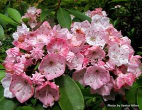photos by senior hiker mountain laurel