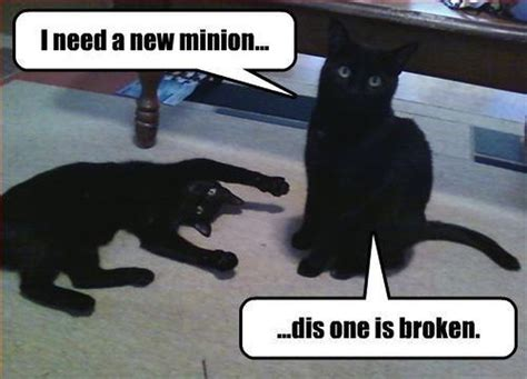 Funny Black Cat Memes - 25 funny cat memes that will make you lol