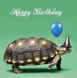 Birthday cards turtles and birthdays on pinterest
