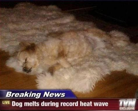 Melting Meme - dog melt meme slapcaption com the best of slapcaption