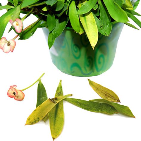 common houseplant problems the ten most common problems of houseplants kathrynanddavid