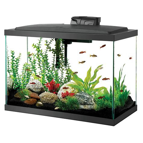 aquascape near me top 7 best 20 gallon aquariums in 2018 market list