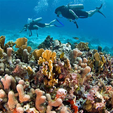 dive tours best dive tours in cancun travel leisure