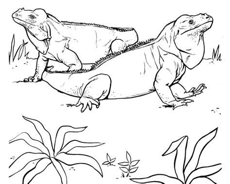 imagenes para colorear iguana imagen de iguana para dibujar imagui