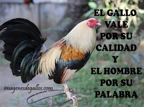 imagenes gratis de gallos con frases descargar imagenes de gallos con frases imagenes de gallos