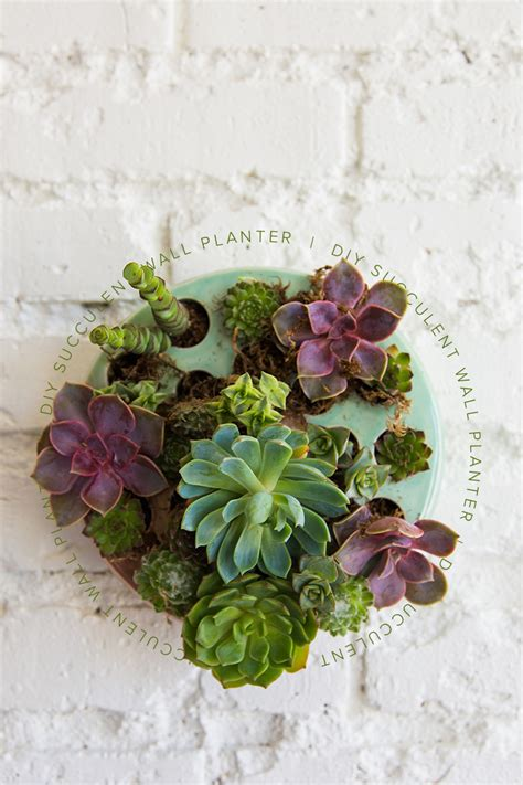diy succulent wall planter the house that lars