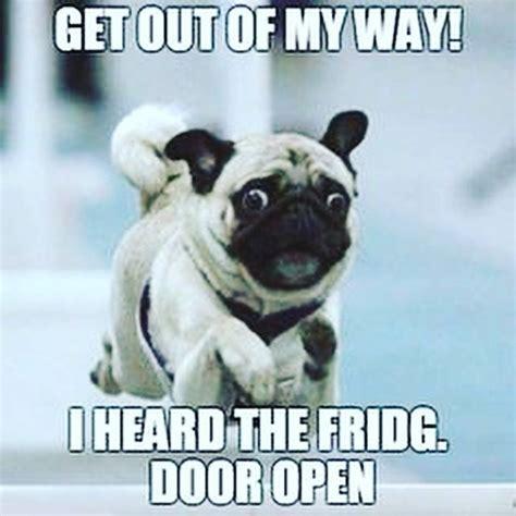 pug puns 25 best ideas about pug humor on pugs pugs and pug meme