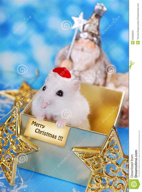 merry christmas  hamster stock image image