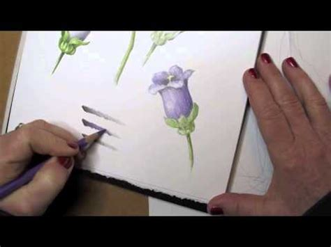 botanical drawing basics creating a tone bar in watercolor pencil and colored pencil youtube
