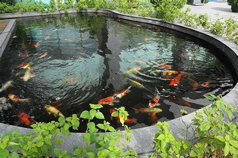 fish survive   bottom   pond information