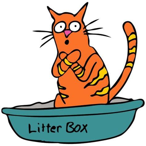 cat using bathroom outside litter box how to prevent litter box problems