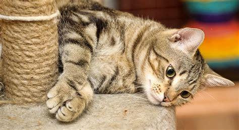 gatto in appartamento gatto in casa gatto in arrivo a casa come prepararsi al