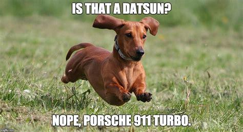 Funny Dachshund Memes - dachshund meme dog breeds picture