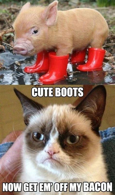 Boot C Meme - grumpy cat pig bacon boots animal cat meme animal
