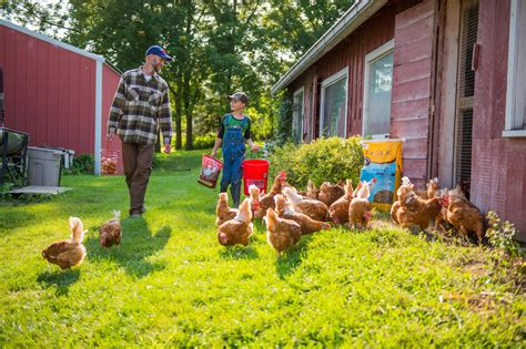 Backyard Poultry Production by Coolhouseplans House Plans And Home Plans