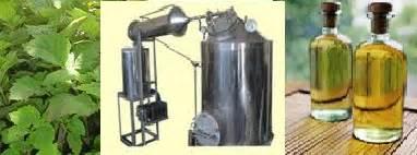 Minyak Nilam Jakarta konsultasi sawit manfaat minyak nilam bagi kesehatan