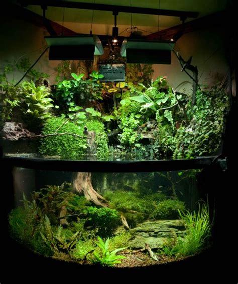aquarium habitat design bird aquarium moss planted tank finch freshwater