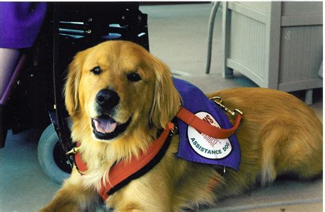 assistance dogs researcher iadw founder announce partnership to increase employment for