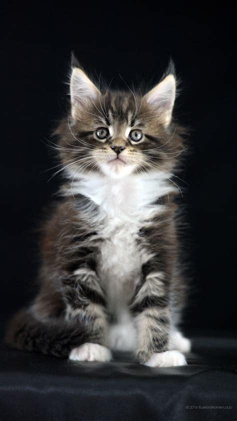 cat wallpaper vertical 1080 x 1920 kittens full hd 1080x1920 free backgrounds